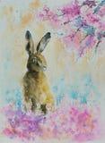 hare stock illustrationer