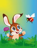 Hare and bee Royalty Free Stock Images