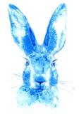 hare Bild för löst djur Royaltyfri Fotografi