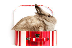 Hare in box Royalty Free Stock Photography