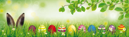 Hare Colored Easter Eggs Grass Beech Twigs Header. Hare ears with easter eggs in the grass on the bokeh background Stock Photos
