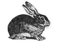 Hare drawing. With black ink Stock Photo