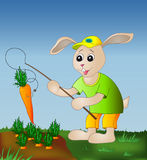 Hare with a fishing tackle and a carrot. Cheerful hare with a fishing tackle catches a carrot from a bed Royalty Free Stock Image