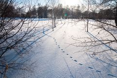 Hare foot traces in the snow, Rabbit tracks and winter field landscape. Sunny winter day stock photos