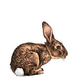 The hare in full growth sits sideways sketch vector Stock Photography