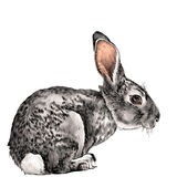 The hare in full growth sits sideways sketch vector Royalty Free Stock Images
