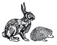 Hare and Hedgehog Stock Images