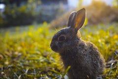 Hare i gräset Fotografering för Bildbyråer
