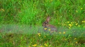 Hare i grönt gräs, en regndusch arkivfilmer