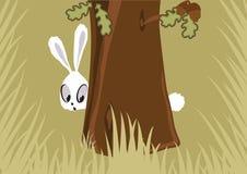 Hare i skogen royaltyfri bild