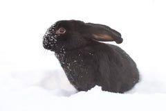 Hare i vinter Arkivbild