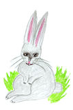 Hare illustration Stock Photography