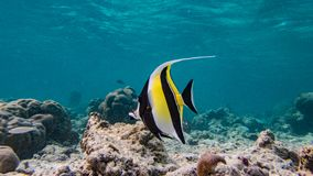 Colorful fish from Maldives stock image