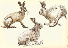 Hare in motion. Collection, three studies hare in motion. / Vector description: Editable in three layers. Number of colors in each layer: no more than sixteen Royalty Free Stock Photography
