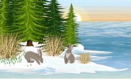 Hare på kusten av en skogsjö Vår Smältande is, de första snödropparna Spruce skog vektor illustrationer