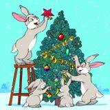 Hare Pine Tree Stock Photos