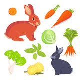 Hare and rabbit cartoon illustration. Rabbits food vector collection. Set Royalty Free Stock Image