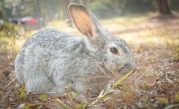 Hare Rabbit Crouching on Ground Stock Photo