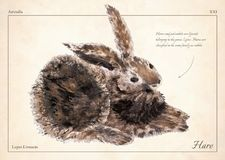 Hare, rabbit isolated vector. Hare, rabbit isolated vector illustration for book, card, articles. Oil painted brown hare. Rabbit isolated vector illustration vector illustration