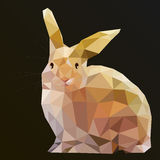 Hare Rabbit Royalty Free Stock Photo