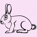 Hare rabbit vector silhouette. Isolated Royalty Free Stock Photos