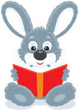 Hare reading a book Royalty Free Stock Image