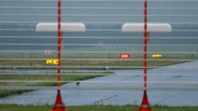 Hare on runway of Dusseldorf airport. European hare Lepus europaeus on runway. Airport on Dusseldorf, Germany stock video