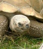 hare sans sköldpadda Royaltyfria Bilder