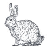 Hare sketch drawing Royalty Free Stock Images