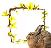 Hare and spring frame - easter card Royalty Free Stock Photo