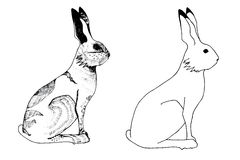 Hare in summer and winter coat Stock Images
