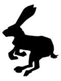 Hare, symbol of cowardice Stock Photos