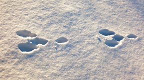 Hare trace in the white snow Stock Images