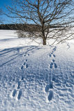 Hare traces Stock Images