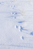 Hare tracks in the snow Royalty Free Stock Photos