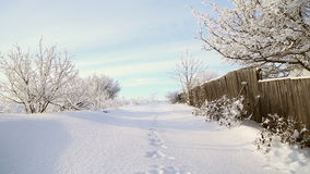 Hare tracks in the snow. Near a wooden fence, beautiful snowy trees, frost on the branches stock video