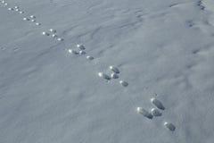 Hare tracks in the snow. Yakutia. Russia Stock Photos