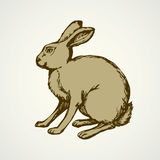 Hare. Vector drawing Stock Photo