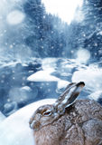 Hare in winter time Stock Photography