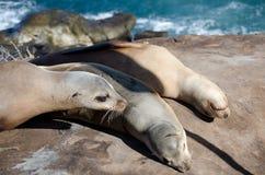 Harem of sea lion near Point La Jolla. San Diego Stock Photo