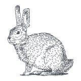 Haren skissar teckningen vektor illustrationer