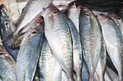 Harengula zunasi. Stacked fresh harengula zunasi on fish market Royalty Free Stock Images