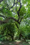 Harenna Forest in Bale Mountains, Ethiopia stock photography