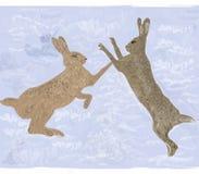 hares Royaltyfria Foton