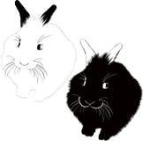 Hares animals Stock Image