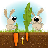Hares big and small carrots Stock Photo