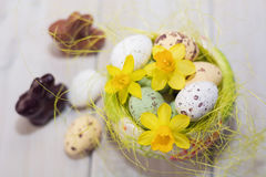 Hares, chocolate eggs in the decorative nest decorated with daff Stock Photography