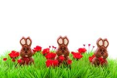 hares för green för chokladeaster gräs Arkivbild