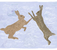 Hares Royalty Free Stock Photos