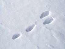 harespår på snö Arkivbild